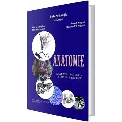 Anatomie. Aparatul digestiv, lucrari practice