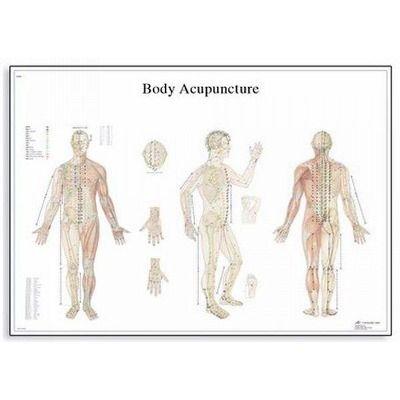 Plansa acupunctura corpului