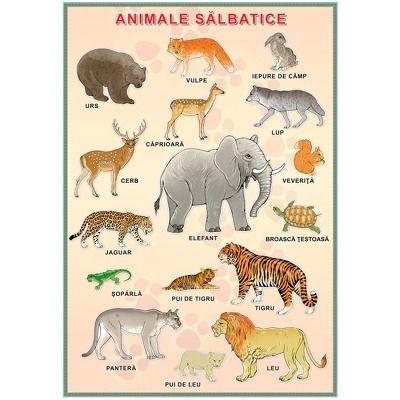 Plansa. Animale salbatice