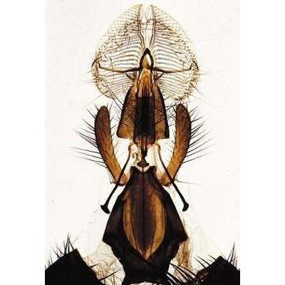 Sectiuni microscopice Arthropoda